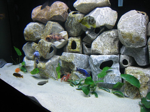 African cichlid tank rocks for African cichlid rock decoration