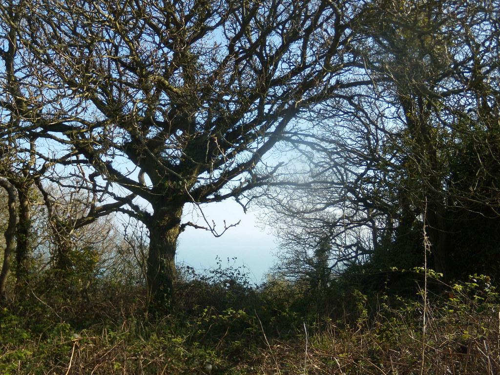 Leaving the last glen - (Ecclesbourne) Rye to Hastings
