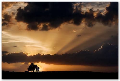 españa tree sunrise andalucía spain bravo amanecer granada árbol sunrays amanecequenoespoco alhambra2006 silviadeluque carreteradelacabra