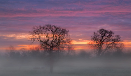 uk mist tree wales sunrise canon landscape eos dawn interestingness britain cymru cardiff explore caerdydd 5d wfc 24105 canoneos5d explored ef24105f4l wentloog welshflickrcymru stevegarrington