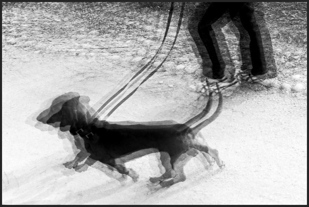 Dinamismo di un cane al guinzaglio 2009 a photo on - Colorazione immagine di un cane ...
