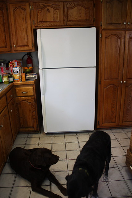 how to clean old refrigerator