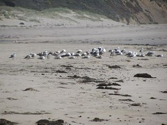 sea gull flock on beach