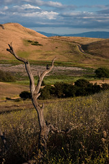 Coyote Hills Regional Park