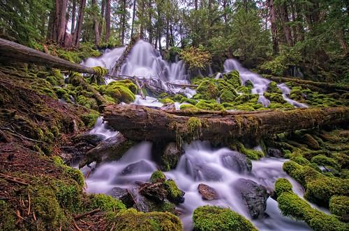 nature water oregon creek forest landscape waterfall moss nikon rainforest bravo stream or logs falls cascades nd douglas cascade 2009 mossy clearwater d300 clearwaterfalls tokina1116