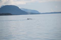 20110507-Alaska2011-D2-DSC_5416.jpg