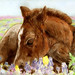 Foal and Flowers - by HorseFeathers