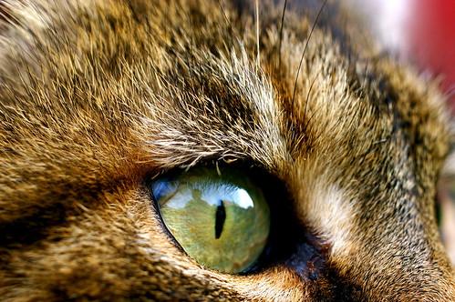 En voilà un bel oeil de tigre!