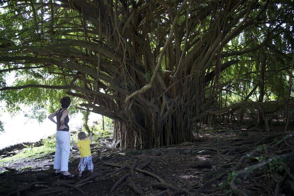 Sis & Lorenz Admire Tree