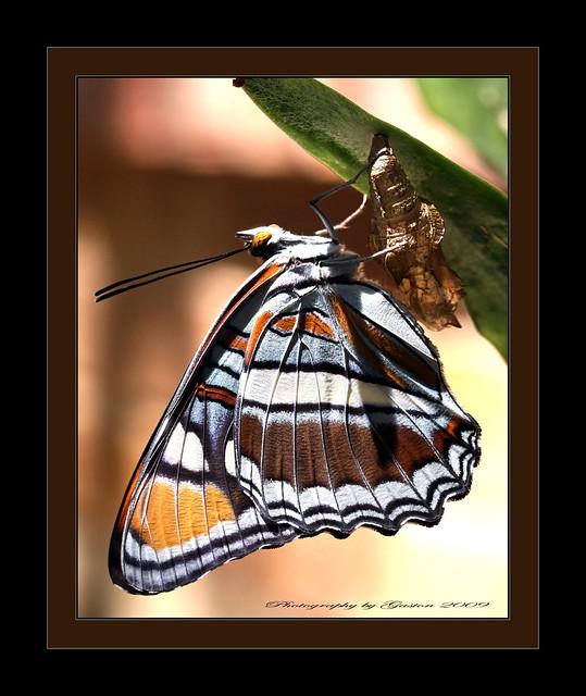 ~~~Nature's Extraordinary Beauty~~~