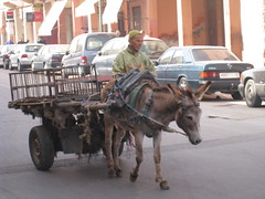 coachman(0.0), horse and buggy(0.0), carriage(0.0), donkey(1.0), mule(1.0), vehicle(1.0), pack animal(1.0), horse harness(1.0), cart(1.0),