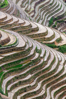 Rice fields, Longsheng, China