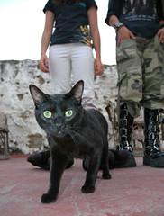 Gato Negro, AKA Mahakala, with that look he gets, rooftop, Guadalajara, Jalisco, Mexico