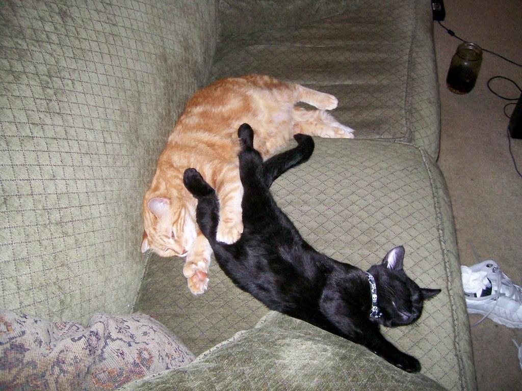 pervert cats (3)