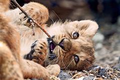 Bebé real... de la selva