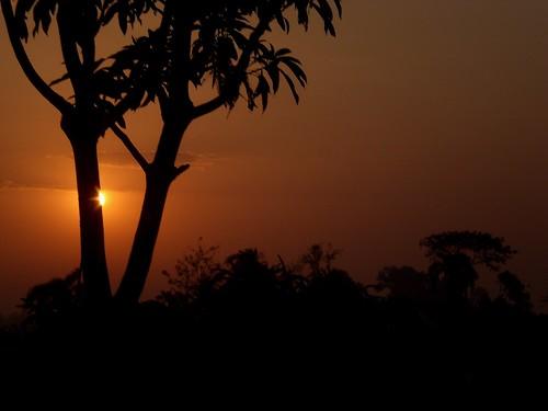 light sky cloud sun tree leaves silhouette rural sunrise gold golden leaf ray branch shine village branches hide rays bangladesh bangla hidenseek chhayapath