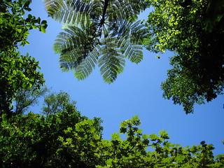 Lush green rainforest
