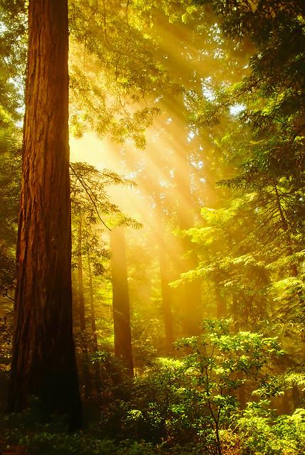 Inspiring Redwoods