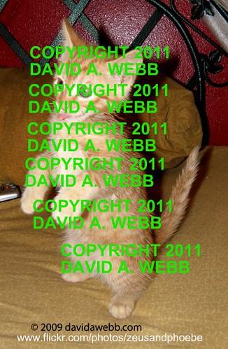 orange usa david animals female cat photography utah feline funny tabby indoor olympus greeneyes phoebe gato gata provo striped redmackereltabby cc300 kittenmagazine catnipaddicts