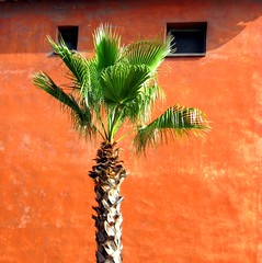 palm trees/fronds