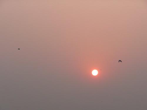 india sunrise crows kolkata westbengal durgapurbridge