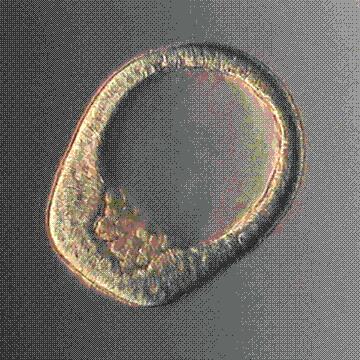 Картинки эмбриона - 1