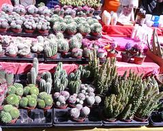 Detalle de unos cactus en el Rastro de Madrid.  ReservasdeCoches.com - Alquiler de coches en Madrid