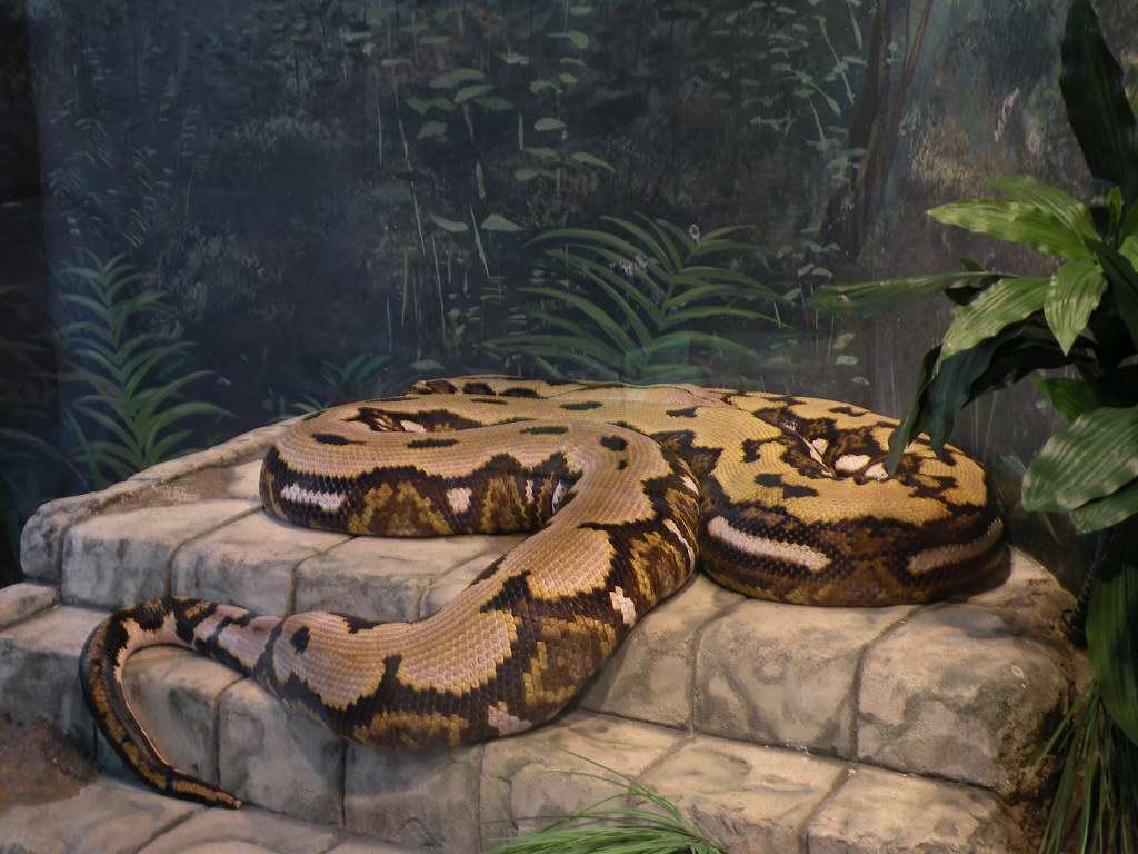 12 Horrific Stories Of Snakes Who Killed Their Owners