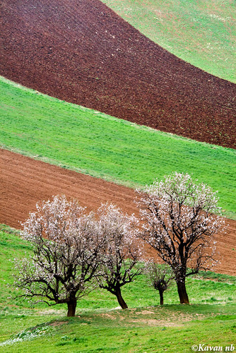 brown tree green grass canon landscape spring iran blossom soil ear bloom iranian plow kurdistan sanandaj kavan kordestan 400d 70200lf4is