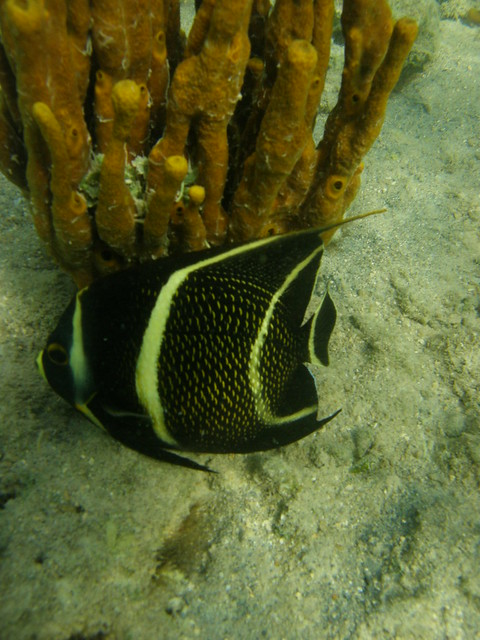 Virgin Islands Ecotours Mangrove Tours