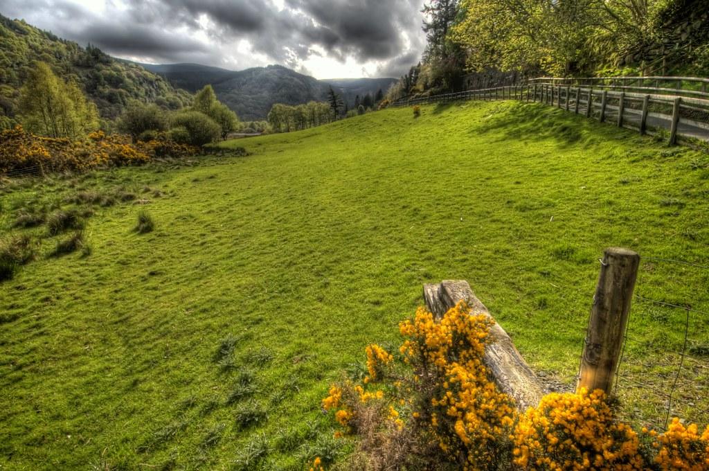 Grass of Glendalough