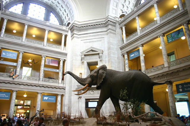 Top 10 Museums in Washington D.C.