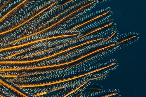Crinoid abstract 02
