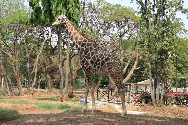 Mysore Zoob