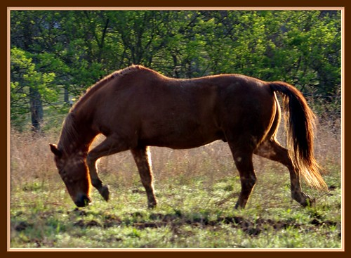 morning horse dance fdsflickrtoys weekend jennygandert gandert