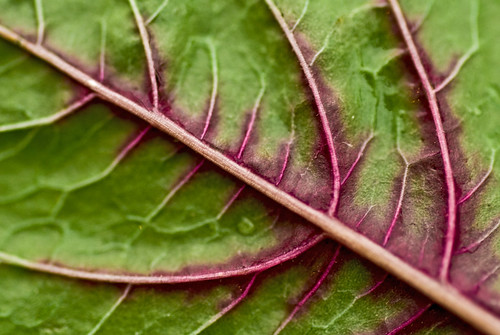 Superfoods To Fight Cancer 3