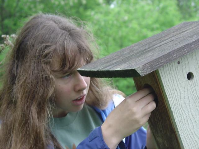 Volunteer monitoring a bluebird box