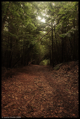 forest nikond50 justinsmith nikon1735mmf28