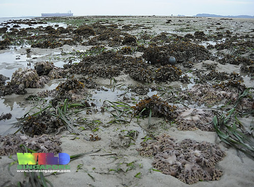 Seagrasses and coral rubble on Beting Bemban Besar