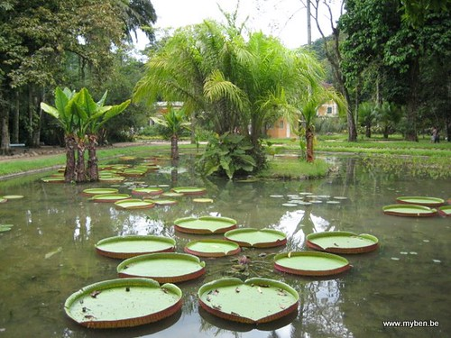 Rio de janeiro jardin botanique 17 flickr photo sharing for Jardin 17 rio gallegos