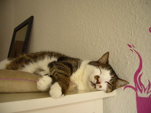 lounging.