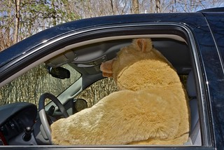 Do Bears Drive in the Woods?