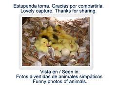 Vista en / Seen in: Fotos divertidas de animales simpáticos. / Funny photos of animals.