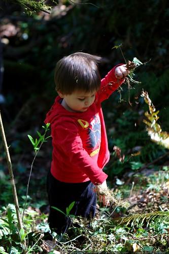 ivy mayhem caused by sequoia    MG 0290