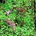 deer family breakfast in our back yard    MG 2001