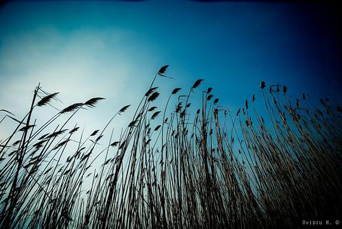 park sky sun lake abstract reed europe view wind perspective romania constanta tokina1224f4 nikond80