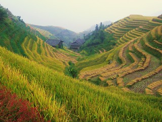 Long Sheng, Ping An Rice Terraces (龙胜梯田)