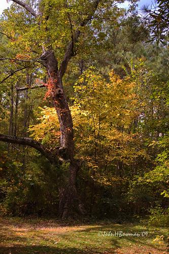virginia october fallcolor isabella 2009 meadowfarm henricocounty canon24105l