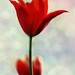 Yalnızca O Ânın Hatırası İçin... by Beyza G.