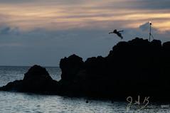 Black rock cliff divers 5